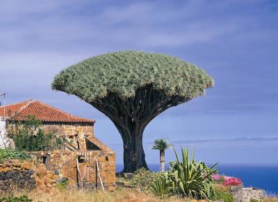 excursions, tenerife, bus, teide, coach, masca, drago, tour, vino