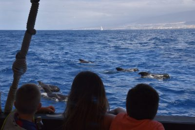 tenerife viking ship ragnarok dolphins and pilot whales